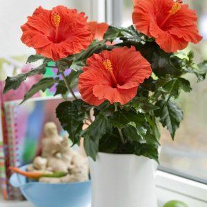 Một số loại hoa nên tránh trong lễ cũng chuyển nhà