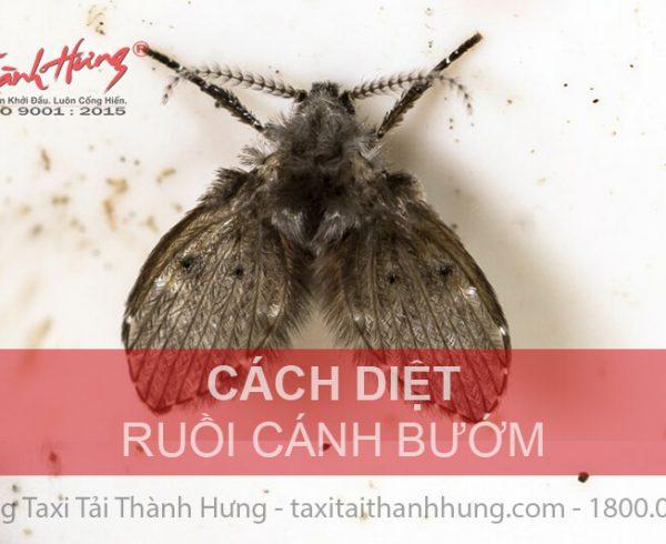 Cách diệt ruồi cánh bướm trong nhà vệ sinh hiệu quả 100%