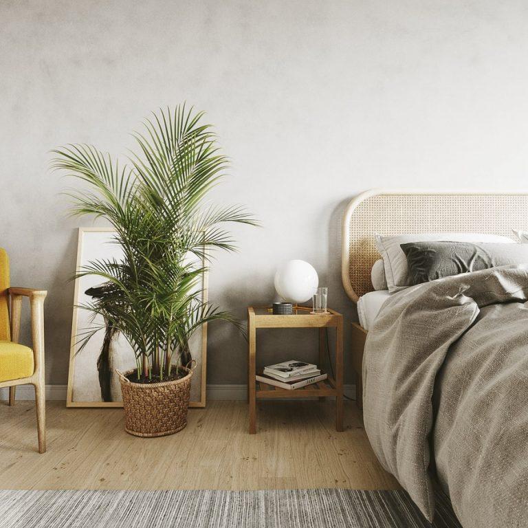 Cây xanh trong phòng ngủ giúp mang lại năng lượng tích cực